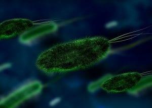 bacteria-106583_1920 (1)